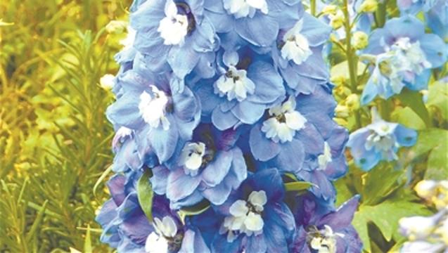 【海珠】海珠布花景 9种花最靓